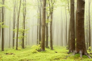 Symbol ekologického bydlení